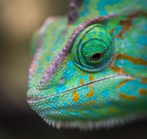 I am a chameleon who can change to fit your style and voice