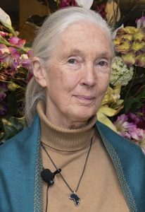 Jane Goodall is one of the calmest scientists I have ever met